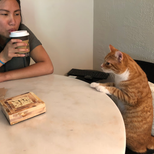 Ann, Asian woman drinking coffee at table as her orange colored cat peaks over table staring at her.